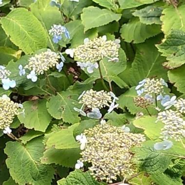 botanics aug